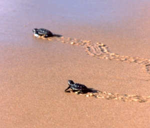 bebes tortues