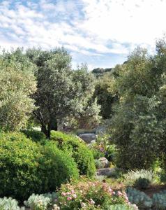 Parc Saleccia 0615 Plantes et Santé_Page_1