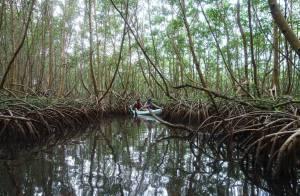 Me in Mangrove Gd Cul de Sac marin Glpe