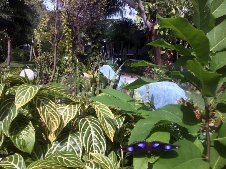Papillon surprise de Ko Tao
