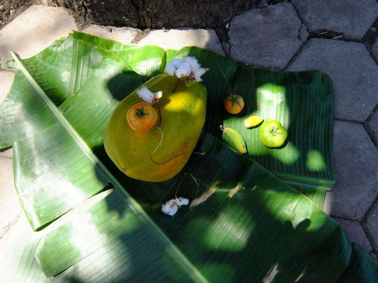 Papaya CapVerdiana